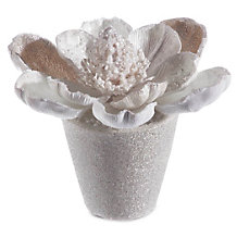 Beaded Magnolia With Pot