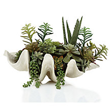 Succulent Shell Pot