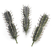 Spiked Cactus Pick - Set of 3
