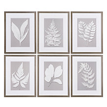 Moonlight Fern - Set of 6