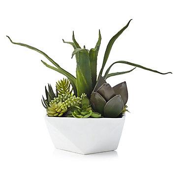 Aloe And Succulent Geo Pot