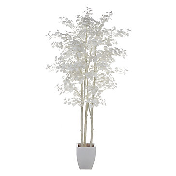 Aspen Tree Indoor Garden Spring Trends Trends Z