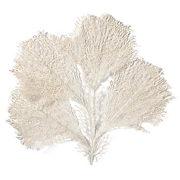 Coral Placemat