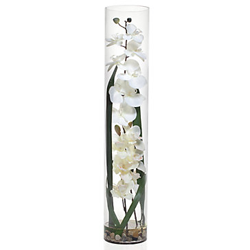 Exotic White Orchid In Glass Vase Accessories Z Gallerie