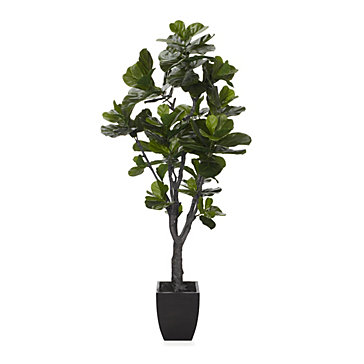 fiddle leaf tree | coastal | collections | z gallerie