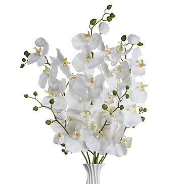 Phalaenopsis Spray - Set of 3