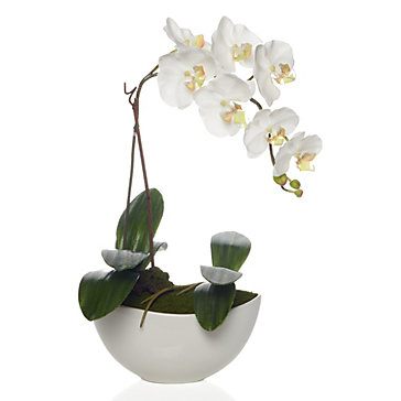 P 13337 Potted Phalaenopsis on Living Room Furniture Collections