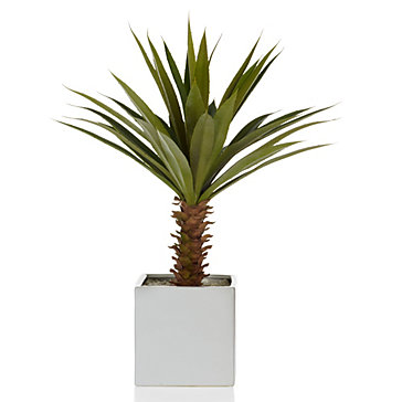 Potted Yucca Plant Coastal Collections Z Gallerie