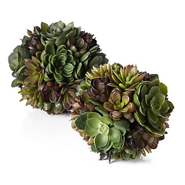 Succulent Ball 30 Off Decorative Accessories Our Top