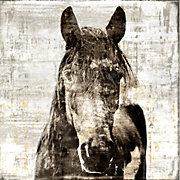 Winter Stallion - Glass Coat